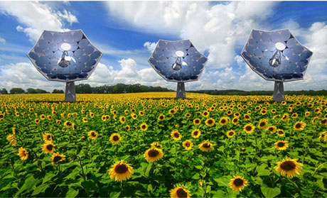 "Figure 2: Three energy-harvesting ""sunflowers"" in a field of conventional sunflowers"