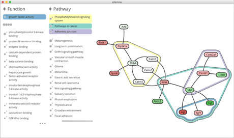 Figure 1: Optimal Heinz module along with enriched functional and pathway categories using eXamine.
