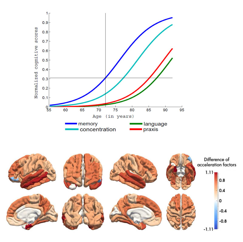 Figure 2: Estimation of disease progression models from a longitudinal dataset of patients with Alzheimer's disease. Upper panel: average trajectories of data change for a set of cognitive measures. The model allows to infer which types of cognitive deficits occur first. Lower panel: differences of pace of atrophy (extracted from anatomical MRI) between patients with Alzheimer's disease and healthy controls. This unveils brain regions in which the degenerative process is the more rapid.