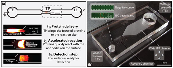 Figure 2: Two applications of ITP for in-vitro diagnostics we pursue. (a) In an ITP-based immunoassay, proteins are focused and delivered to a reaction site, where the enhanced concentration drives an accelerated reaction. (b) A device for ITP focusing from large sample volumes. The inset shows bacteria focused from an initial concentration of 100 bacteria/mL.