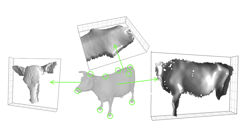Figure 1: The system was implemented in order to allow a fast extraction and monitoring of different cow body parameters and in particular heart girth, length and height.