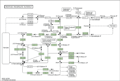 MCMC Network: Graphical Interface for Bayesian Analysis of Metabolic