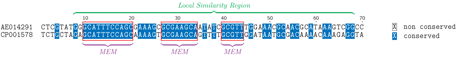 Figure 1: Different anchors for whole genome alignment. Alignment of fragments of Brucella suis and B. microtii genomes showing on one hand Maximal Exact Matches (MEM) of length > 5 and a (much longer) Local Alignment. Identical bases are shown in blue background color.