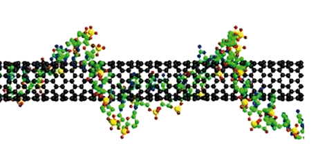 Figure 1. Example of DNA wrapping a carbon nanotube. The chemical bonding of nanotubes is composed entirely of sp2-bonds, similar to those of graphite. These bonds provide nanotubes with their unique strength, and other specific physical-chemical properties, selectively changed by the bonding with DNA filament.