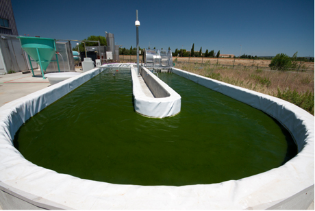 Figure 1: A typical raceway for cultivating microalgae. Notice the paddlewheel which mixes the culture suspension. Photo: INRA